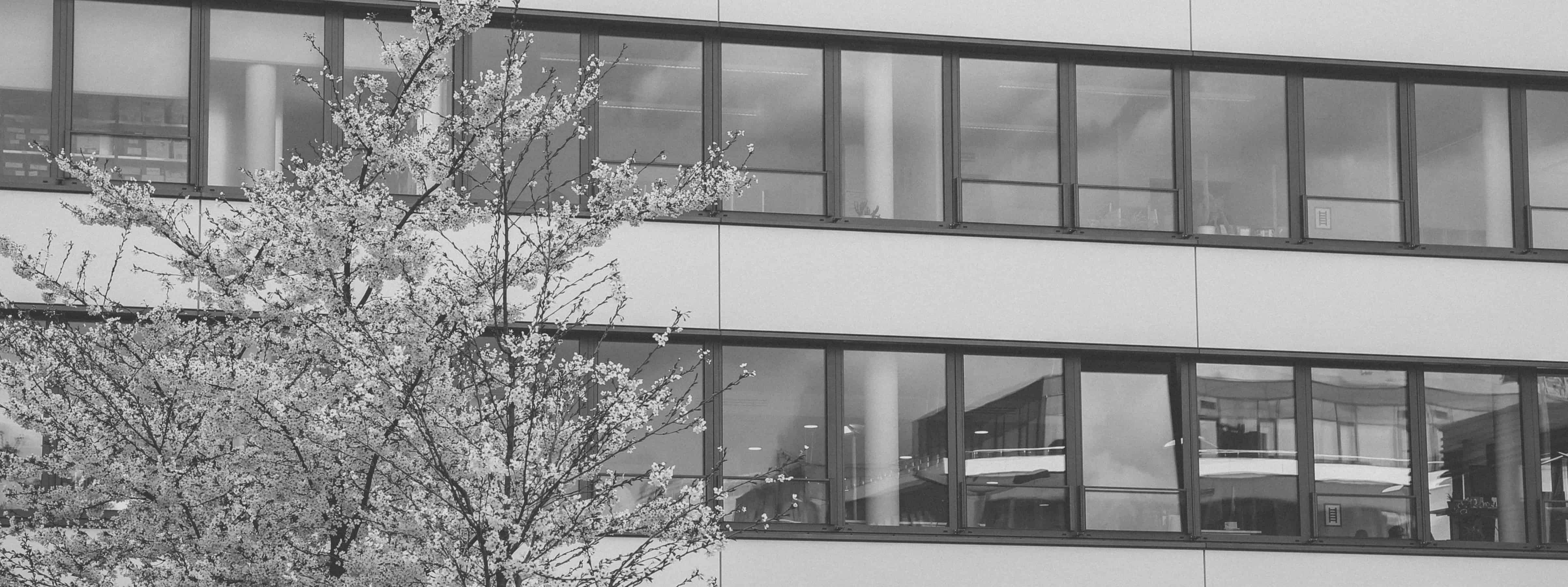 Bartscher & Hasenäcker Consulting GmbH